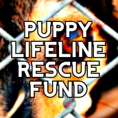 Support Humanity's Puppy Lifeline Rescue Fund Today!